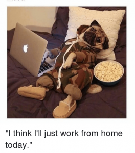 work from home today